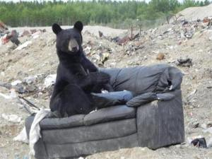 Black Bear on Old Couch for Furniture Removal Landfill By I Am The SuperMan Tumblr Account