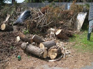 What You Should Know About Yard Waste Hauling