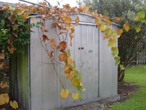 shed removal_2