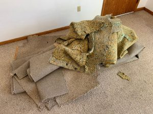 Top Palm Harbor Carpet Removal Mistakes